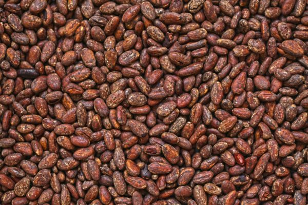 Africa Cocoa Supplier